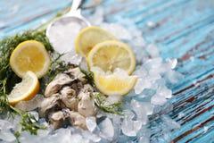 新鲜的牡蛎用柠檬和香菜 它是健康的菜单 库存图片