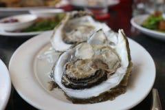 新鲜的牡蛎盘 库存照片