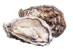 新鲜的牡蛎隔绝与在白色背景的阴影 裁减路线 免版税库存照片