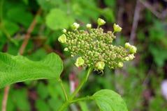 新鲜的狂放的开花在森林在春天离开 库存照片