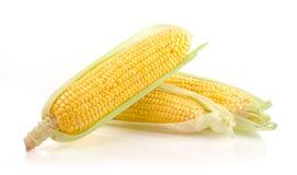 新鲜的玉米棒子 图库摄影