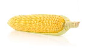 新鲜的玉米棒子 库存照片