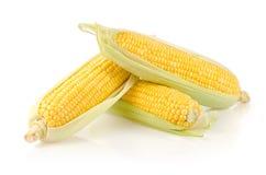 新鲜的玉米棒子 库存图片