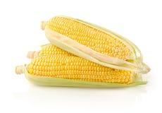 新鲜的玉米棒子 免版税库存图片
