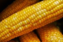 新鲜的玉米特写镜头对角线 库存图片