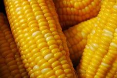 新鲜的玉米特写镜头 免版税库存照片