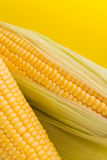 新鲜的玉米特写镜头 库存照片