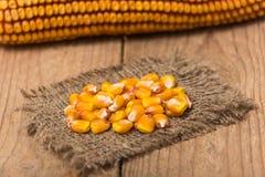新鲜的玉米特写镜头 库存图片