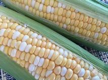 新鲜的玉米穗特写镜头 免版税库存照片