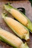 新鲜的玉米 免版税图库摄影