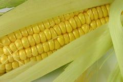 新鲜的玉米 免版税库存图片