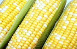 新鲜的玉米 库存照片