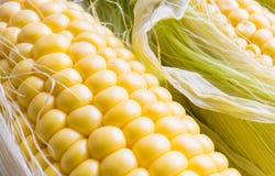 年轻新鲜的玉米 免版税库存照片