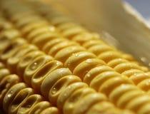 新鲜的玉米 库存图片