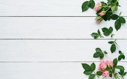 新鲜的玫瑰的构成在白色木背景的 复制空间 顶面wiew 库存照片