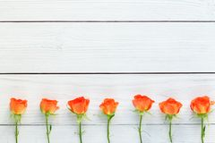 新鲜的玫瑰的构成在白色木背景的 图库摄影