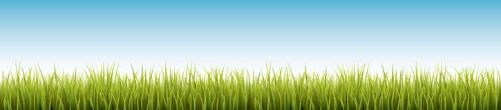 新鲜的现实绿草-传染媒介例证 免版税库存照片