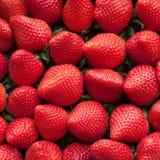 新鲜的理想的成熟草莓 免版税库存照片
