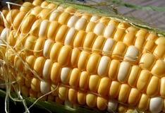 新鲜的甜玉米 图库摄影