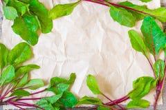 新鲜的甜菜根叶子框架  免版税图库摄影