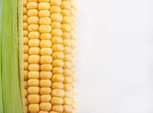 新鲜的甜黄色玉米 图库摄影
