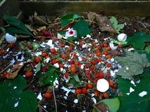 新鲜的生物废物和天然肥料用野玫瑰果 图库摄影