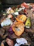 新鲜的生物废物和天然肥料 免版税图库摄影