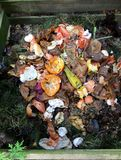 新鲜的生物废物和天然肥料 免版税库存照片