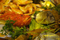 新鲜的生鱼Fisherman's抓住从爱琴海,西西里岛, I的 库存照片