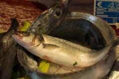 新鲜的生鱼Fisherman's抓住从爱琴海,西西里岛, I的 免版税库存照片