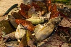 新鲜的生鱼Fisherman's抓住从爱琴海,西西里岛, I的 免版税库存图片