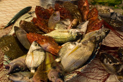 新鲜的生鱼Fisherman's抓住从爱琴海,西西里岛, I的 图库摄影