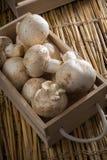 新鲜的白色蘑菇,蘑菇de巴黎 库存图片