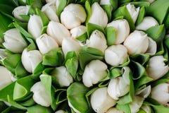 新鲜的白色郁金香有绿色叶子自然春天背景 花纹理 库存图片