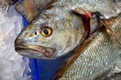 新鲜的石斑鱼在悉尼鱼市上,澳大利亚 免版税库存图片