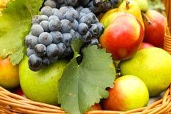 新鲜的秋天果子 图库摄影