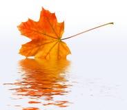新鲜的秋天 库存图片