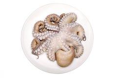 新鲜的章鱼未加工和 免版税库存图片