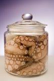 新鲜的章鱼 免版税库存图片
