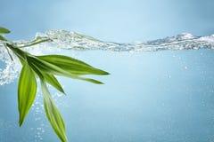 新鲜的竹叶子在水中 库存照片