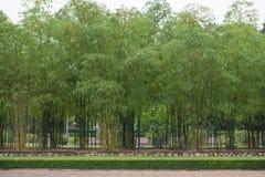 新鲜的竹子在庭院里 库存照片