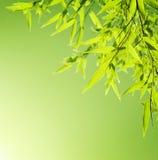 新鲜的竹子留下边界 免版税库存图片