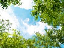 新鲜的竹子留下边界 库存照片