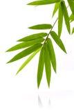 新鲜的竹子留给边界水下落被隔绝在白色bac 免版税库存照片