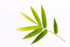 新鲜的竹子留给边界水下落被隔绝在白色bac 库存照片