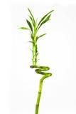 新鲜的竹子 免版税库存图片