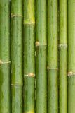 新鲜的竹子 库存照片