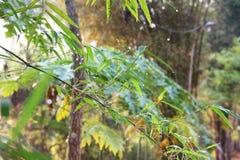 新鲜的竹子 免版税库存照片