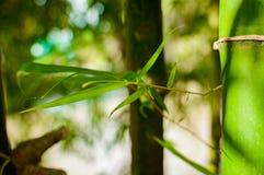 新鲜的竹树 库存图片