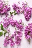 新鲜的紫罗兰色淡紫色花 库存照片